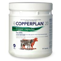 Copperplan 20
